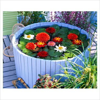 Gap photos garden plant picture library finished for Plastic floating pond plants