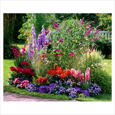 Gap photos garden plant picture library mixed bed for Planting flower beds in front of house