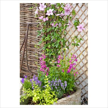 gap photos garden plant picture library clematis in container climbing up trellis gap