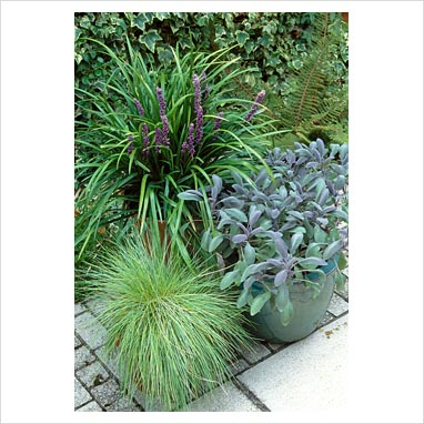 Gap photos garden plant picture library liriope for Ornamental grass in containers for privacy