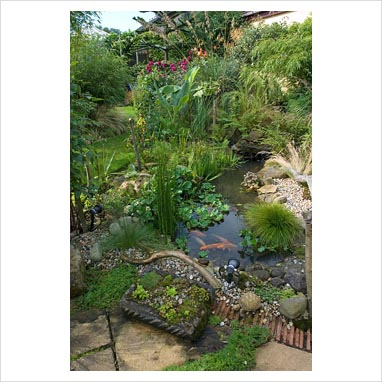 You are not logged in for Koi pool lancashire