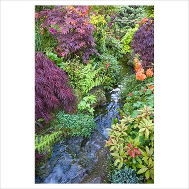 Gap photos garden plant picture library water for Japanese themed garden plants