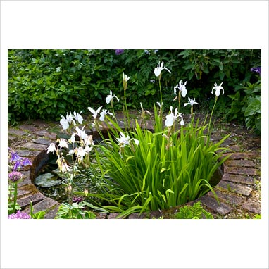 Gap photos garden plant picture library iris for Small round pond