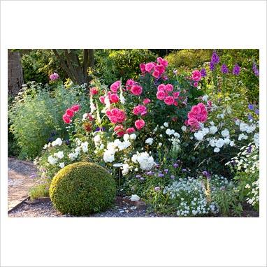 gap photos garden plant picture library mixed border. Black Bedroom Furniture Sets. Home Design Ideas