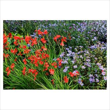 Silky Aster (Aster sericeus) - Illinois Wildflowers