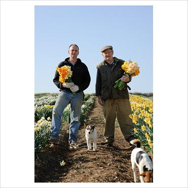 Ron and Adrian Scamp in the daffodil fields, Cornwall