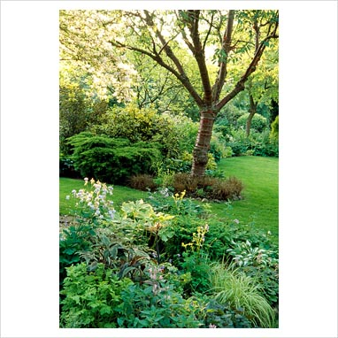 GAP Photos Garden Plant Picture Library Shady