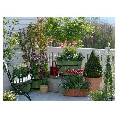 Un giardino inglese sul balcone consigli forum di - The garden web forum ...