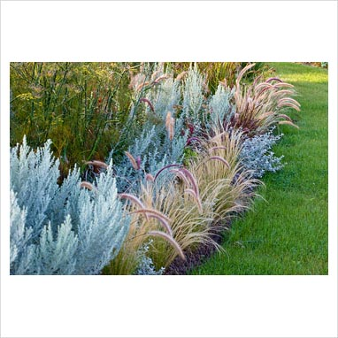 Gap photos garden plant picture library ornamental for Tall grass border