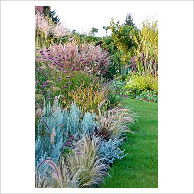 Gap photos garden plant picture library ornamental for Small ornamental grasses for borders