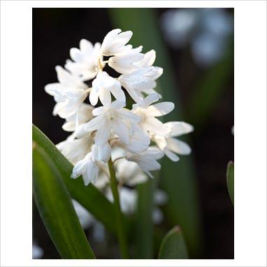 kulturpflanzen korn 8 buchstaben