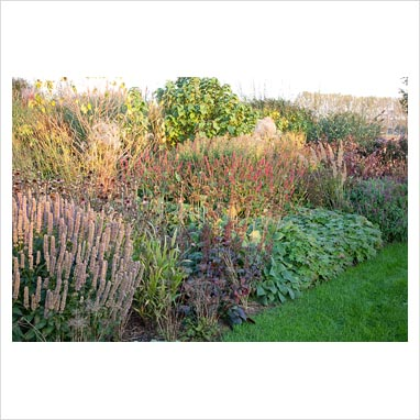 Gap photos garden plant picture library bed of for Ornamental grass bed