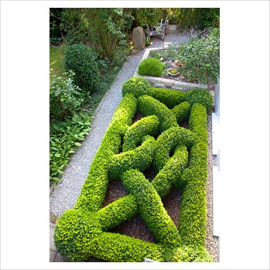 Gap photos garden plant picture library boxwood knot for Herb knot garden designs