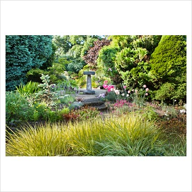 Gap photos garden plant picture library view of the for Small ornamental grasses for borders