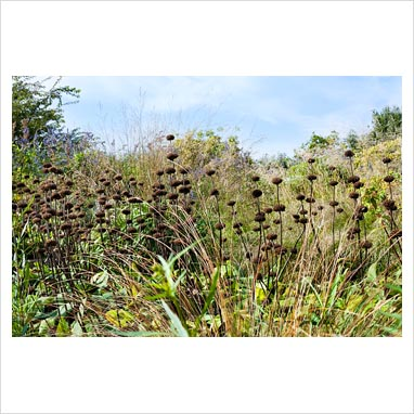 Gap photos garden plant picture library autumn view for Small ornamental grasses for borders