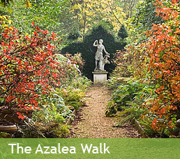 The Azalea Walk
