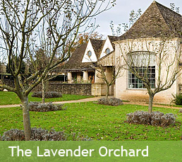 The Lavender Orchard