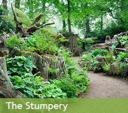 The Stumpery