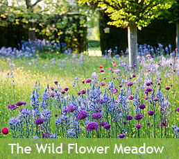 The Wild Flower Meadow