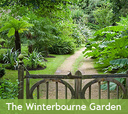 The Winterbourne Garden